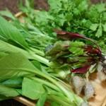 ファミリーサラダセットは新鮮さが長持ちしてみずみずしいまま食べられるよ