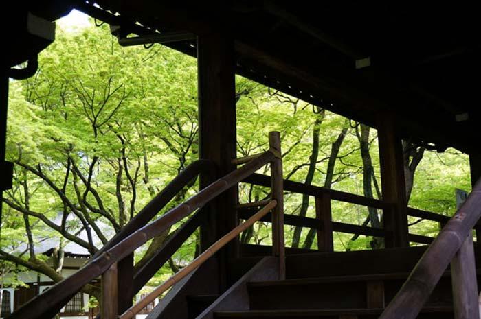 真如堂の紅葉の新緑がオススメ!京都の春の撮影スポットを紹介