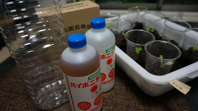 バルコニーで野菜の水耕栽培!培養液の作り方と水やりの頻度!