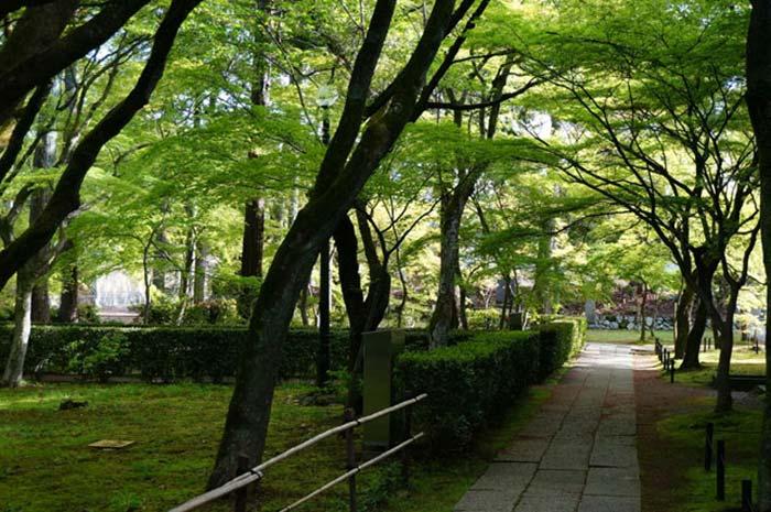 新緑の小道が続く
