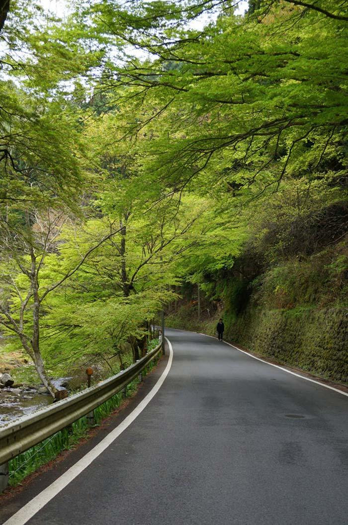 道中新緑のトンネル