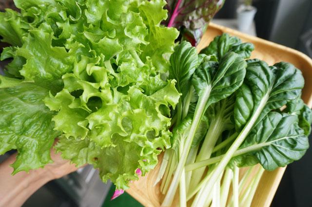 収穫した野菜03