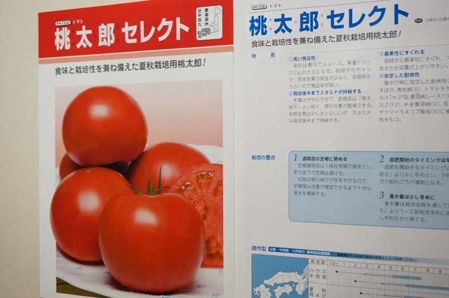 DSC00077トマトがない