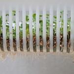余った種でベビーリーフの水耕栽培!種まき&発芽編!