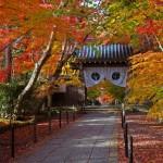 有名紅葉スポット「京都の光明寺」の撮影にチャレンジ!見頃や駐車場の情報付