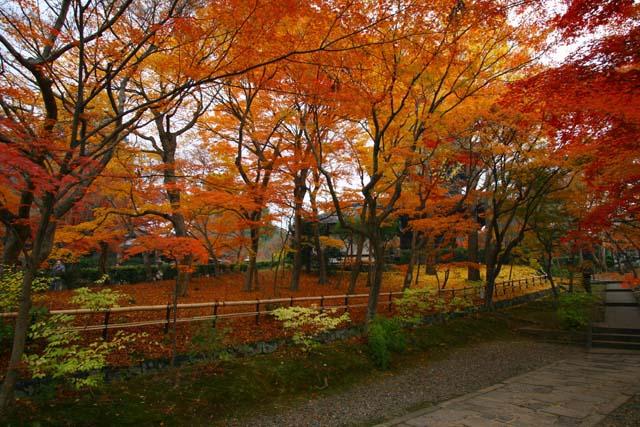 写真撮影に最適な京都のオススメ紅葉スポット!見ごろ情報付