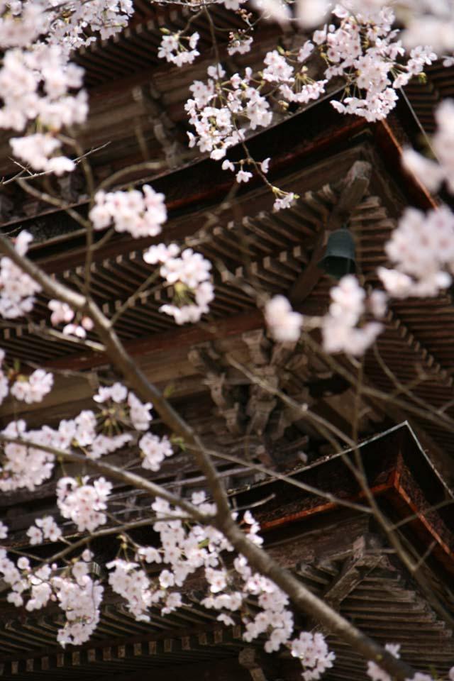 yozakura-nijyojyoIMG_3709