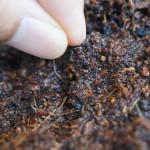 野菜の水耕栽培をもっと簡単に!自作の新しい方法を考えてみた!