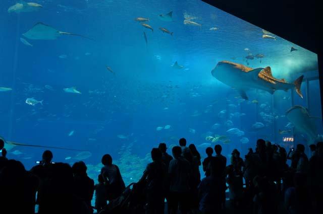 超巨大水槽がすごすぎる!美ら海水族館にいってみた!沖縄自転車一人旅!