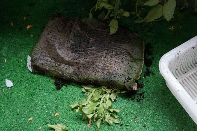 家庭菜園は台風対策が重要!野菜が台風被害で吹っ飛んじゃった!