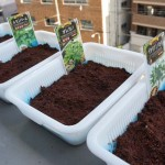 ハーブの水耕栽培にチャレンジ!秋野菜の種まき編