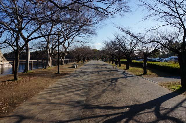 DSC05460osakajyo-running