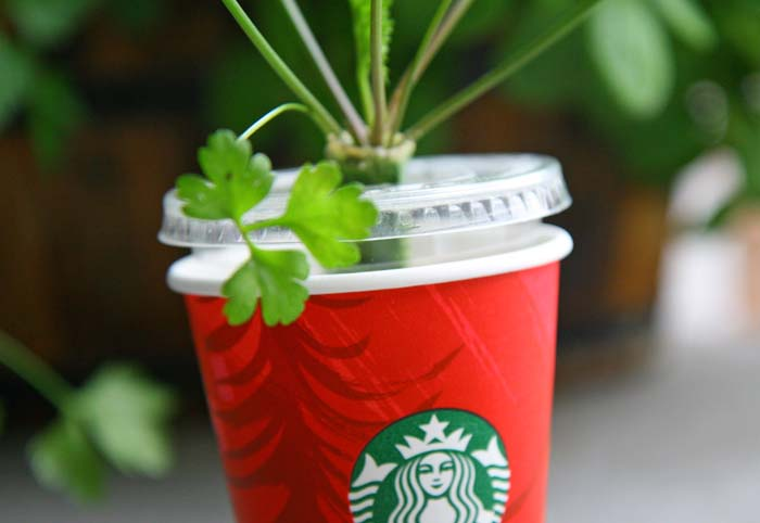 starbucks-recycle-cup24
