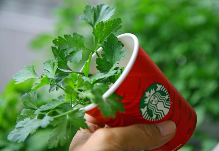 starbucks-recycle-cup42