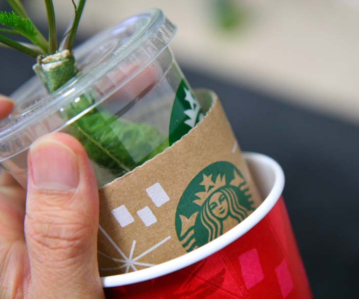starbacks-cup-recycle0051