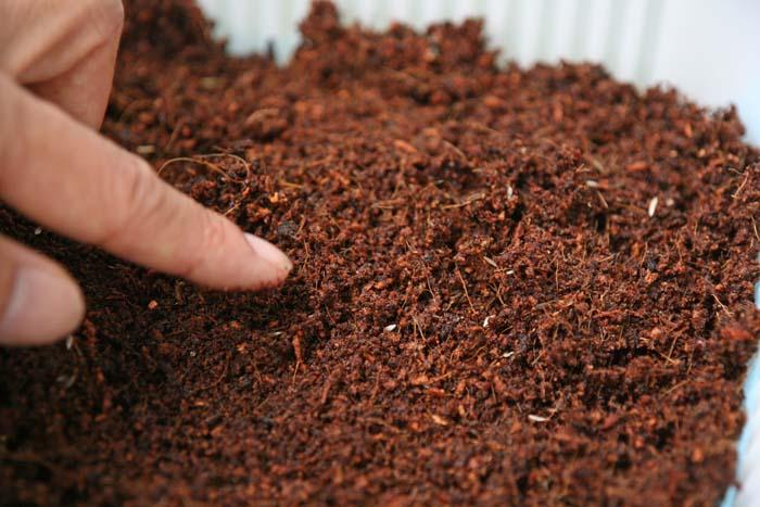 メロンにトマトにリーフレタス!水耕栽培の種まきの方法をご紹介!