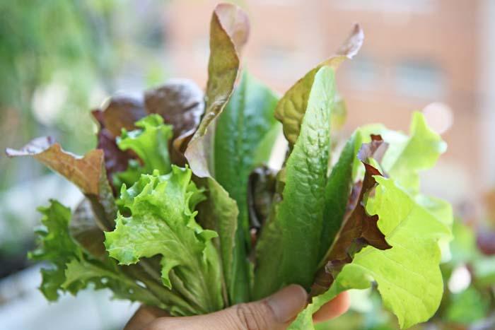 wc2015sp-leaf-letas-aburamusshi02