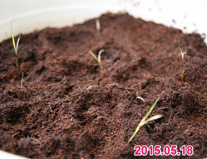 wc2015sp-ine-grow01a