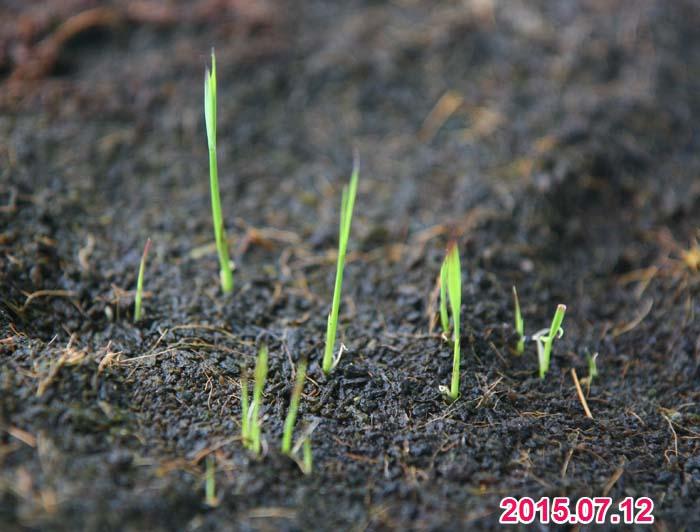 wc2015sp-ine-grow11a