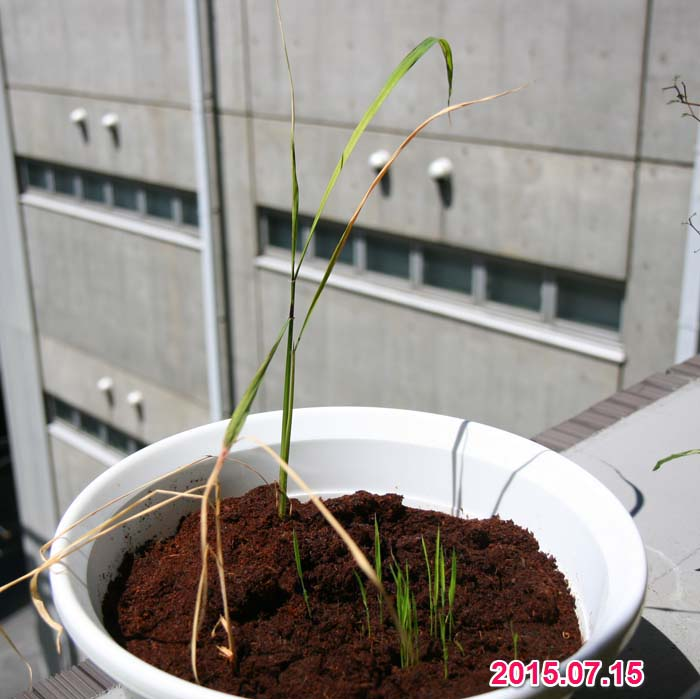 wc2015sp-ine-grow15a