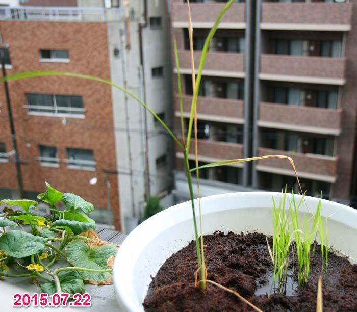 wc2015sp-ine-grow20a