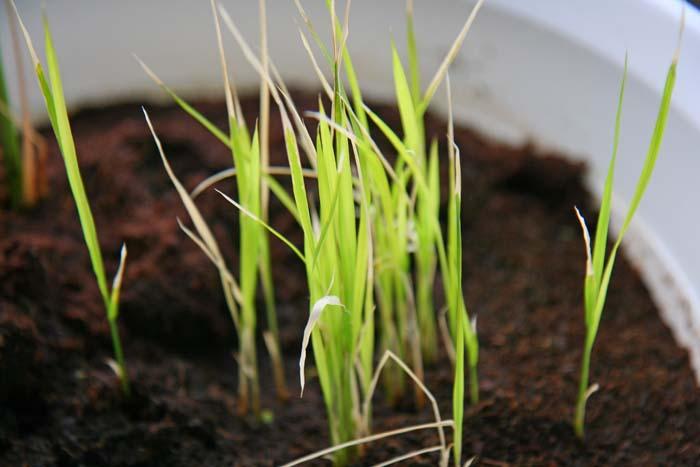 wc2015sp-ine-grow22