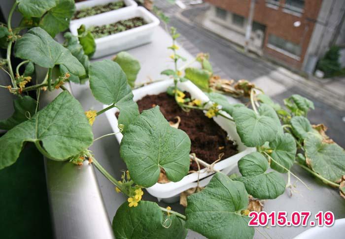 wc2015sp-melon-bear07a