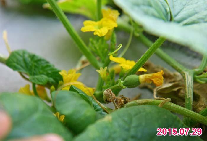 wc2015sp-melon-bear18a