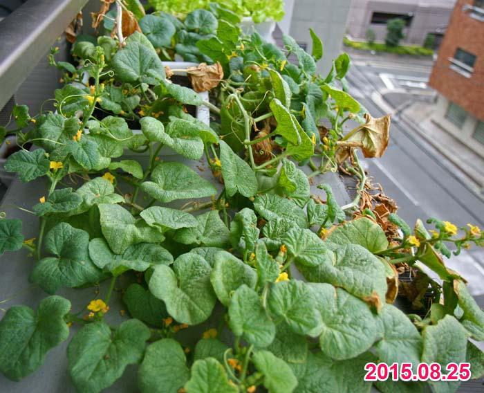 wc2015sp-melon-bear27a