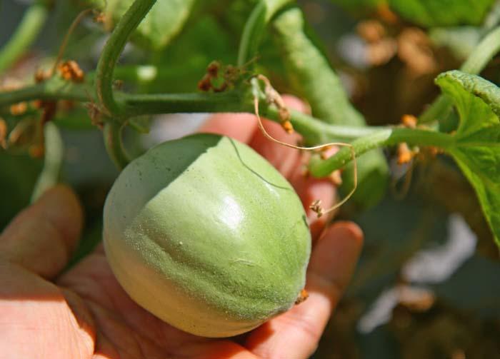 wc2015-melon-result28