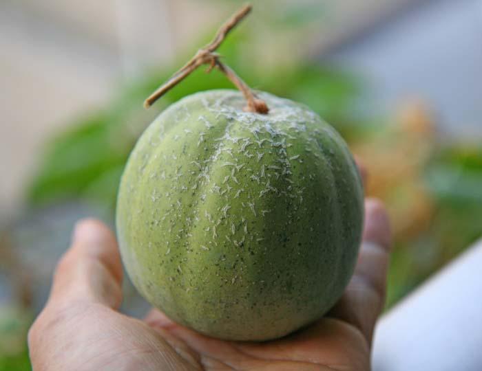 wc2015-melon-result31