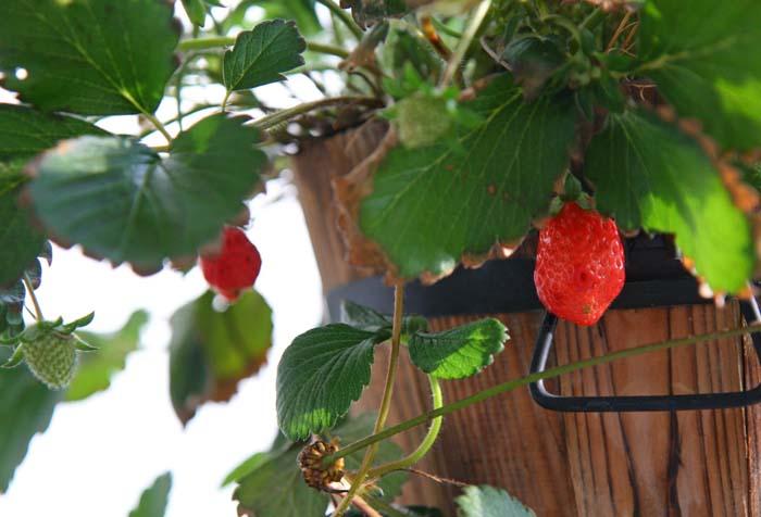 春夏秋冬楽しむコツは?なんでも寄せ植えでベランダを楽しくしてみたよ!