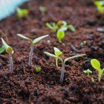 古い種の寿命は?発芽するか試してみたよ!野菜の種の保存期間や方法の情報付