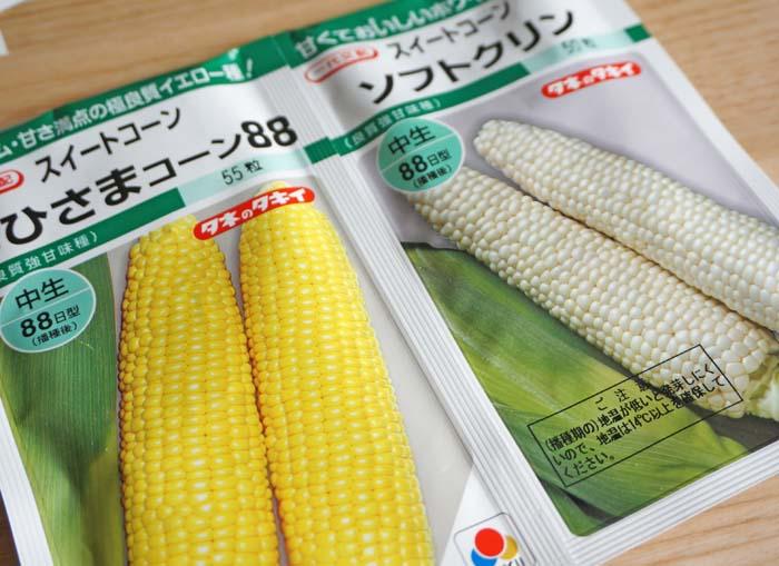 wc2016sp-corn-melon-planting13