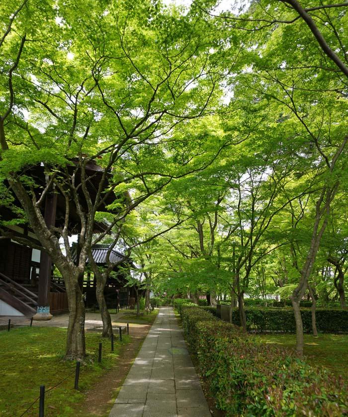 fresh-green-sonnyodo28
