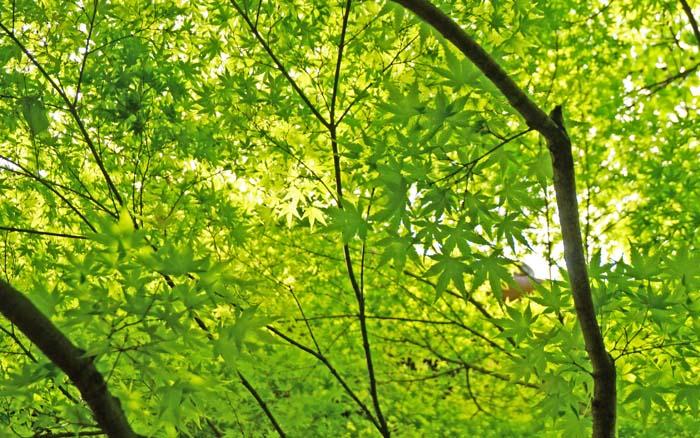 fresh-green-sonnyodo29