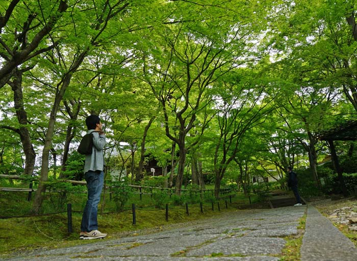 京都でしっとりと新緑を満喫できるオススメ穴場情報!混雑しないから写真撮影にも最適だよ。