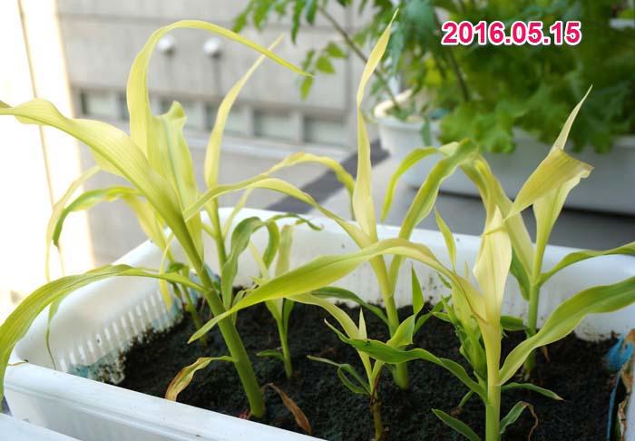 wc2016sp-coan-grow20a