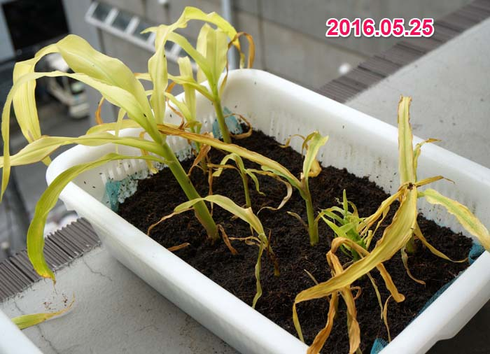 wc2016sp-coan-grow22a