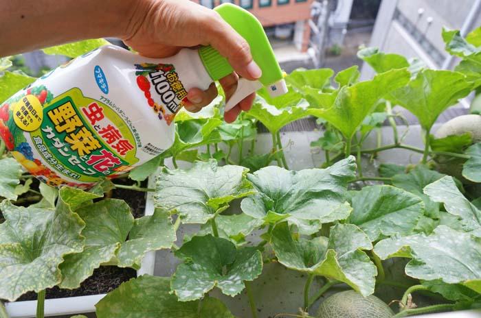 wc2016-melon-udonkobyou17