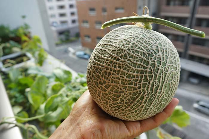wc2016sp-melon-taste24