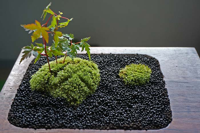 苔玉を発展させた苔の景色盆栽を作ってみた!