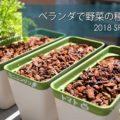 土を使わないおしゃれなベランダ菜園!春野菜の種まきをしてみた!