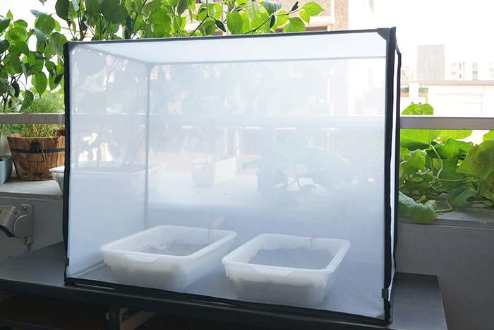 水耕栽培の虫対策!虫除けネットでアブラムシもコバエもプランターごと防ぐよ!