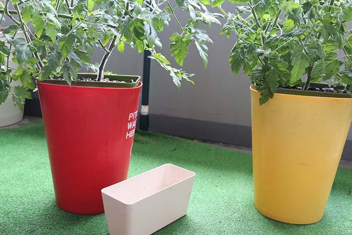 水耕栽培容器を大型に変更