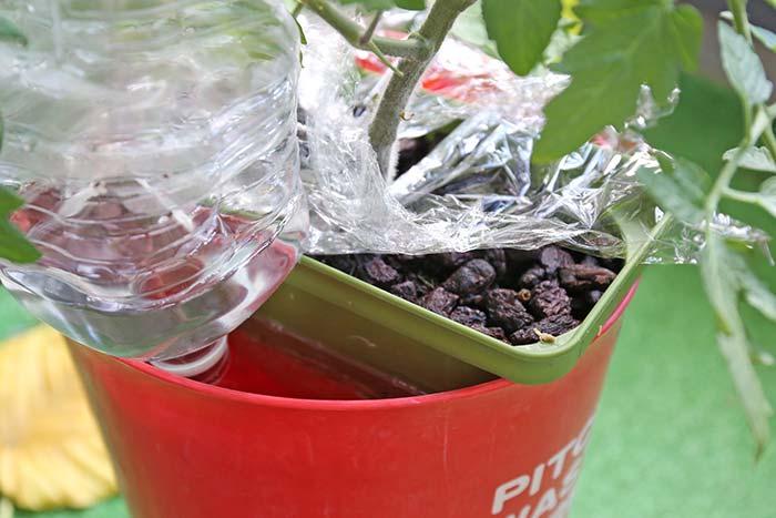 水やりできなくて1週間後の水耕栽培