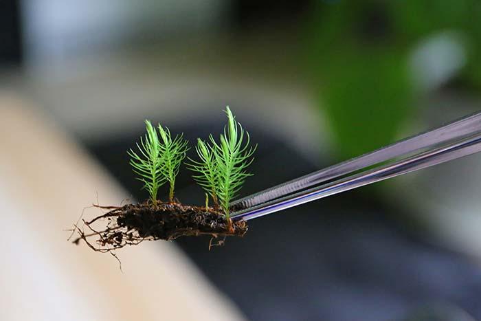 立体的な苔テラリウムを作ってみた!簡単な作り方で苔が元気に育つよ