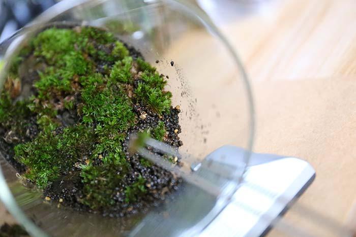 苔テラリウムの植え付けの様子