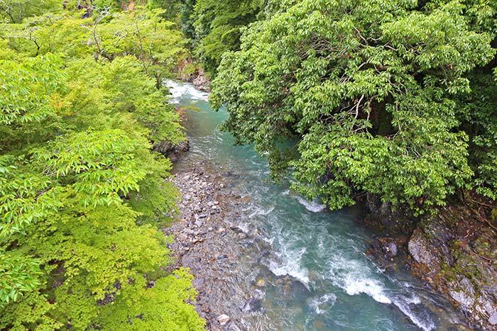 京都高雄の渓流