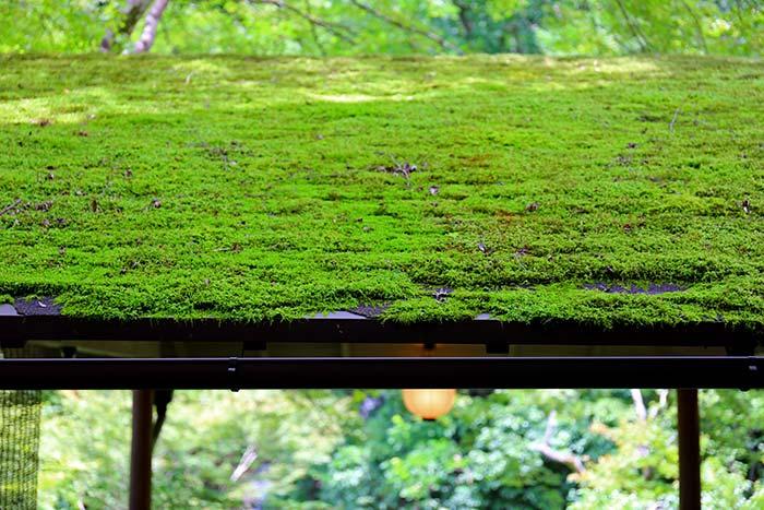 川床の屋根の上に苔がびっしり